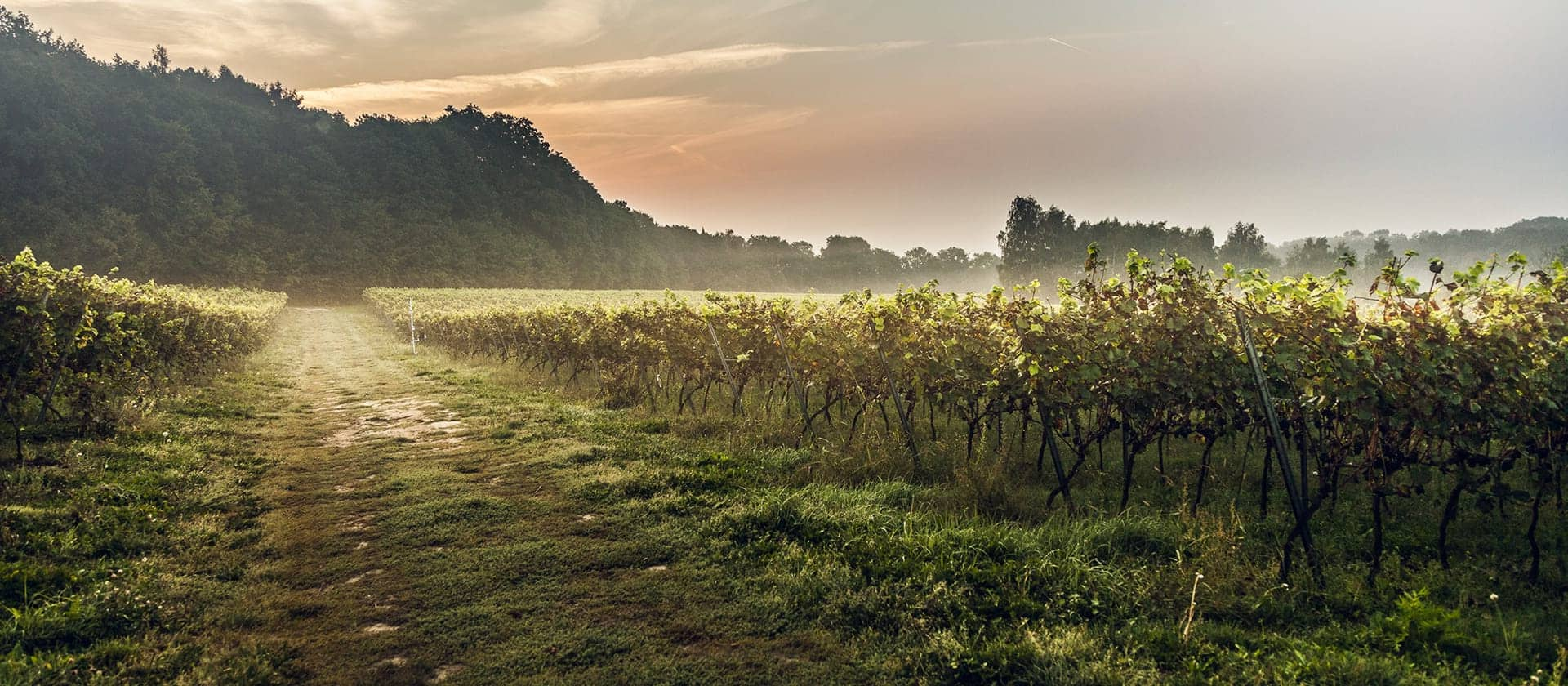 Winnica (Vineyard)